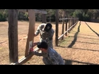 USAMU Basic Rifleman's Course Part 6