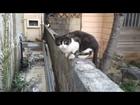 沖縄・那覇にて猫達に嫌われる / I disliked Cats in Naha, Okinawa