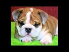 Really cute dogs...and something else l Video #2