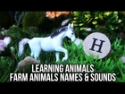 Learning Animals Names Sounds and Shapes for Kids: Farm Animals #2   Horse Cow Pig Bull Sheep Donkey