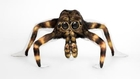 Naked Contortionist Models Transformed Into Animals By Body Paint