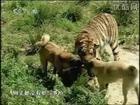 Kangal vs. Kaplan