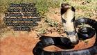 Worlds 10 Most Dangerous Snakes (with SnakeBytesTV)